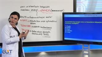 Açıköğretim İşletme 1. Yarıyıl Soru Bankaları 7 Ders Kampanya