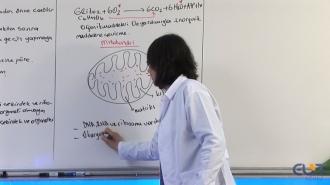 10.Sınıf Biyoloji Görüntülü Eğitim Seti