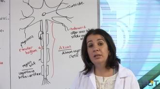 12.Sınıf Biyoloji Görüntülü Eğitim Seti