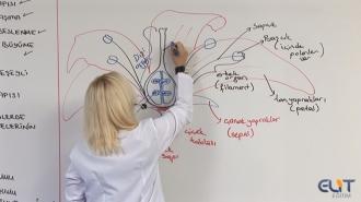 (AYT) YKS Biyoloji Görüntülü Eğitim Seti