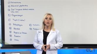 TYT Biyoloji Görüntülü Eğitim Seti